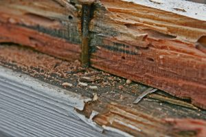 Termite Damage and Termite Control Services in Enid