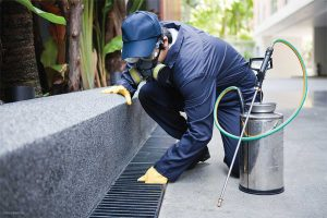 Mouse Extermination and Control Services in Enid